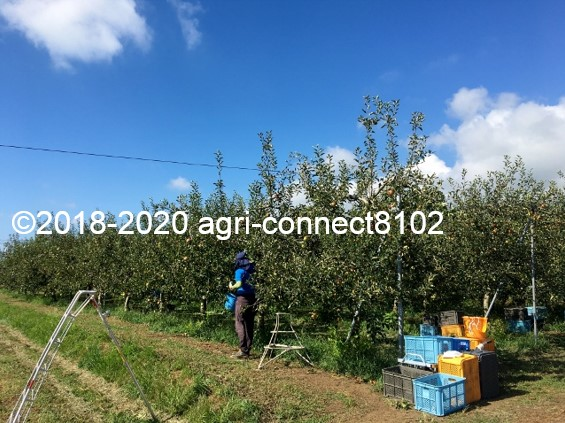 f:id:agri-connect:20200904234018j:plain