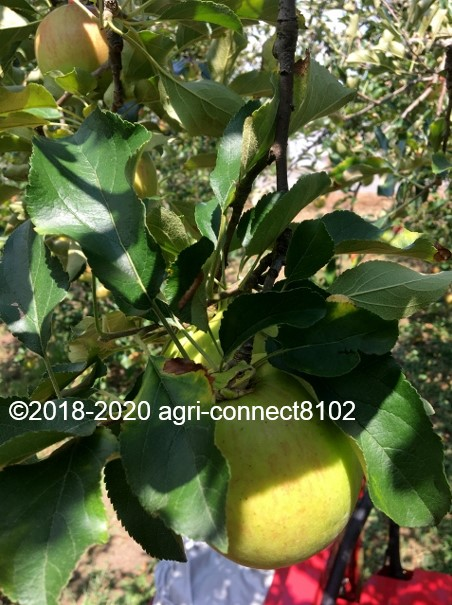 f:id:agri-connect:20200904234845j:plain