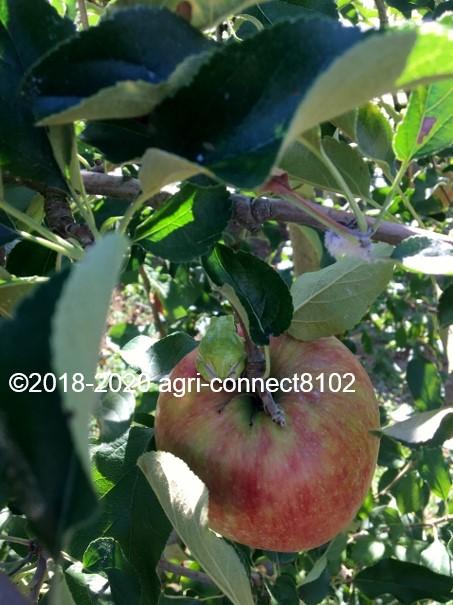 f:id:agri-connect:20200914232650j:plain