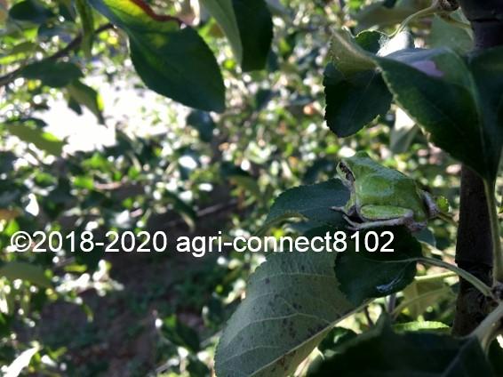 f:id:agri-connect:20200914232655j:plain