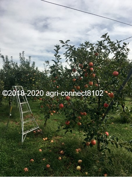 f:id:agri-connect:20200918212126j:plain