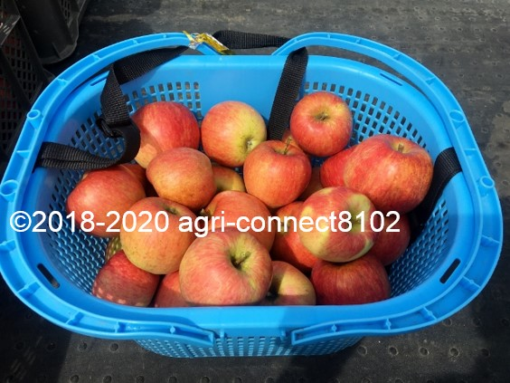 f:id:agri-connect:20200918212538j:plain