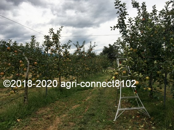f:id:agri-connect:20200926235521j:plain