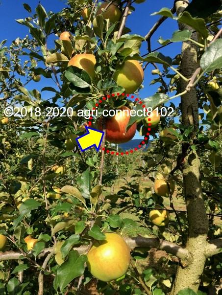 f:id:agri-connect:20200926235546j:plain