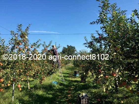 f:id:agri-connect:20201008233556j:plain