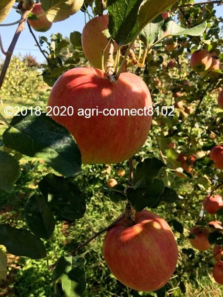 f:id:agri-connect:20201008233614j:plain