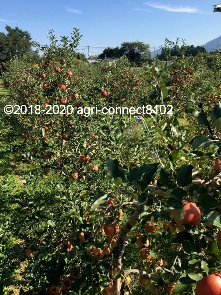 f:id:agri-connect:20201008233619j:plain