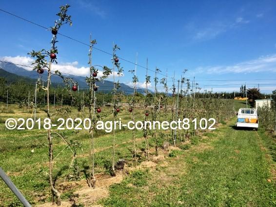 f:id:agri-connect:20201008234328j:plain