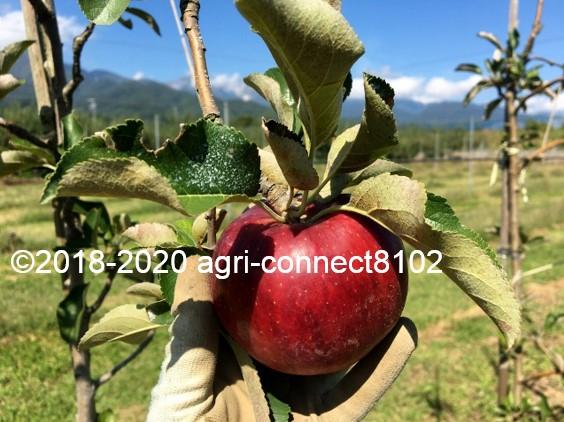 f:id:agri-connect:20201008234342j:plain