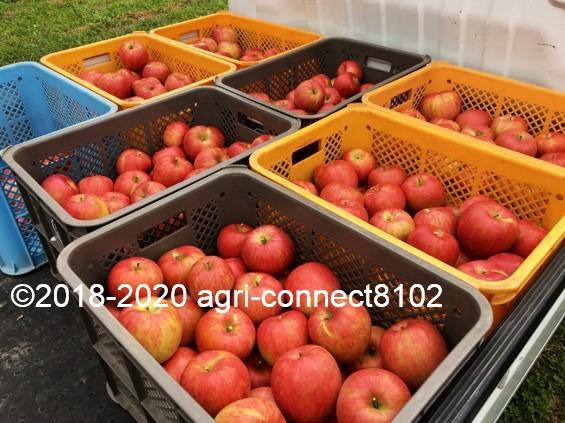 f:id:agri-connect:20201008235147j:plain
