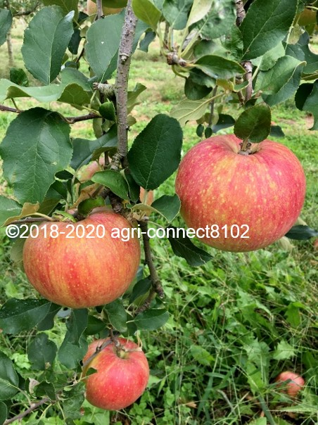 f:id:agri-connect:20201008235259j:plain