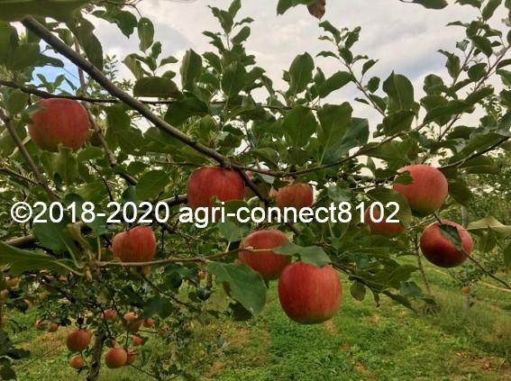 f:id:agri-connect:20201008235557j:plain