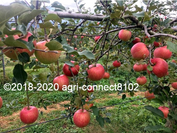 f:id:agri-connect:20201008235601j:plain