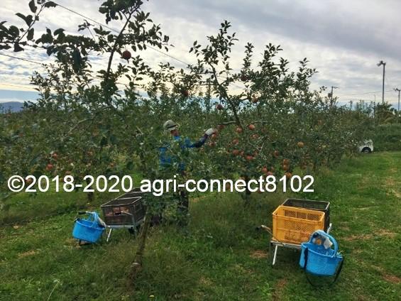 f:id:agri-connect:20201008235951j:plain