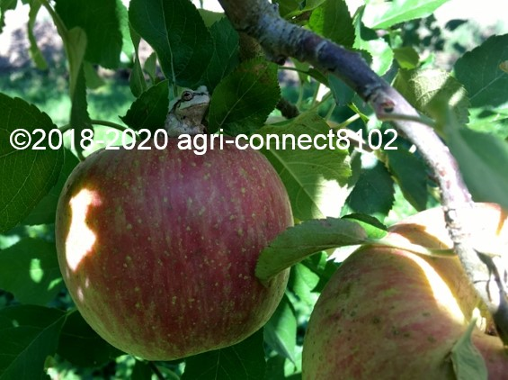 f:id:agri-connect:20201018233436j:plain