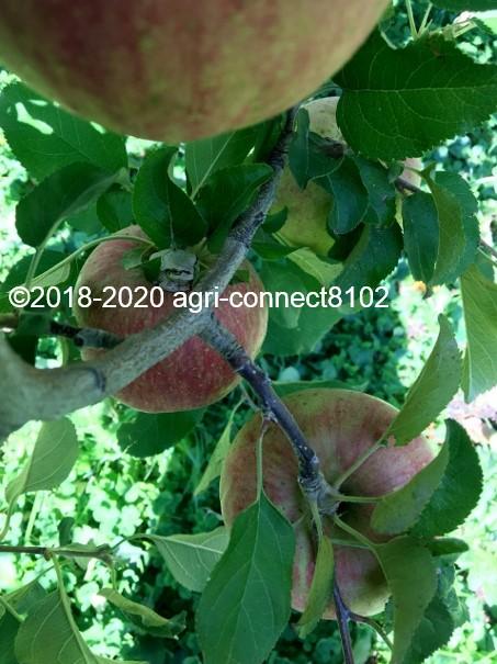 f:id:agri-connect:20201018233447j:plain