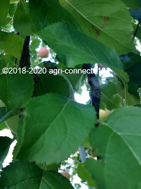f:id:agri-connect:20201018233452j:plain