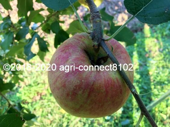 f:id:agri-connect:20201018233555j:plain