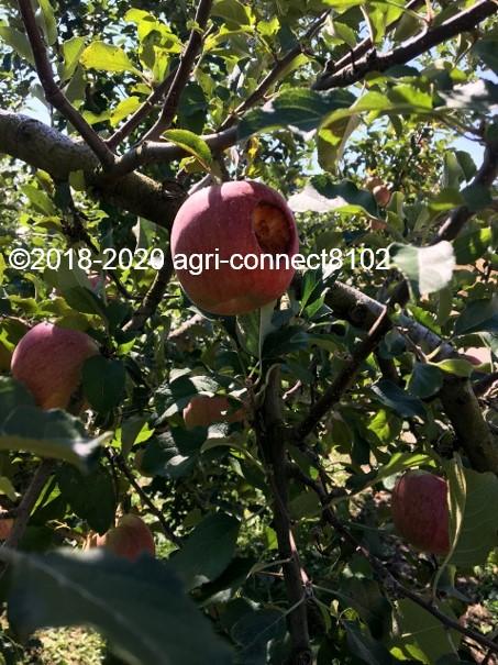 f:id:agri-connect:20201018233613j:plain