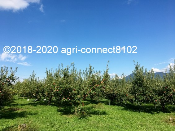 f:id:agri-connect:20201018233652j:plain