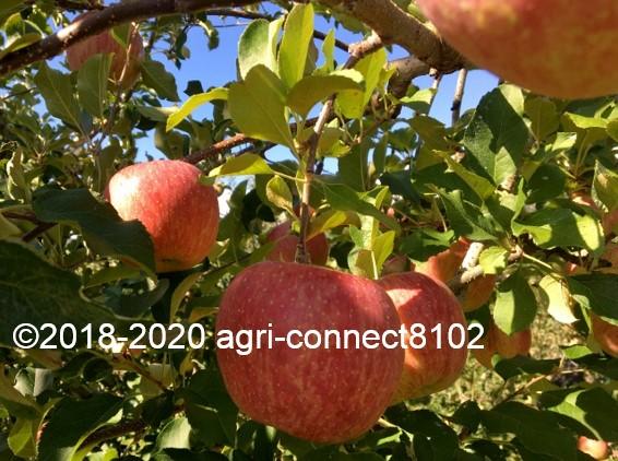 f:id:agri-connect:20201018233658j:plain