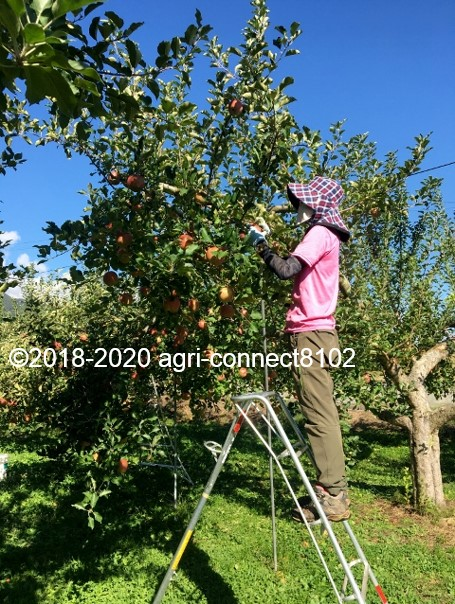 f:id:agri-connect:20201018233704j:plain