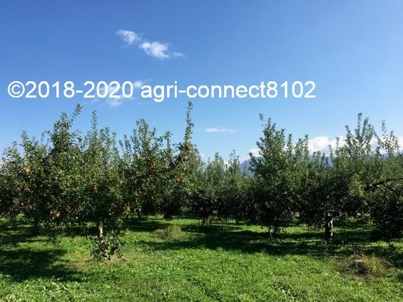 f:id:agri-connect:20201018234016j:plain