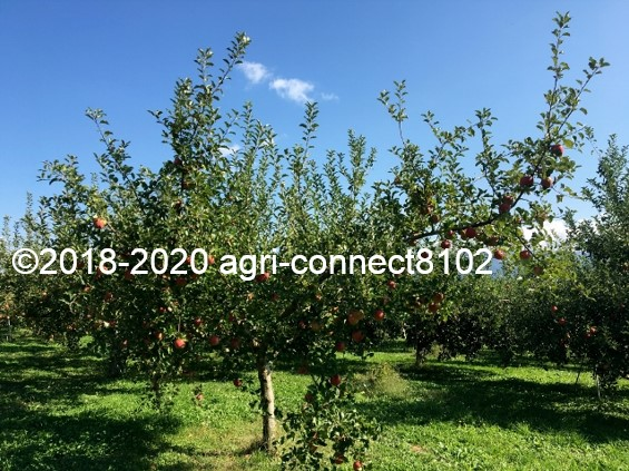 f:id:agri-connect:20201018234022j:plain