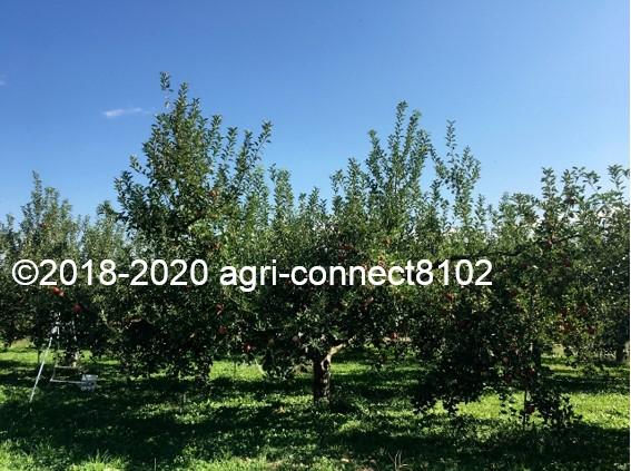 f:id:agri-connect:20201018234026j:plain