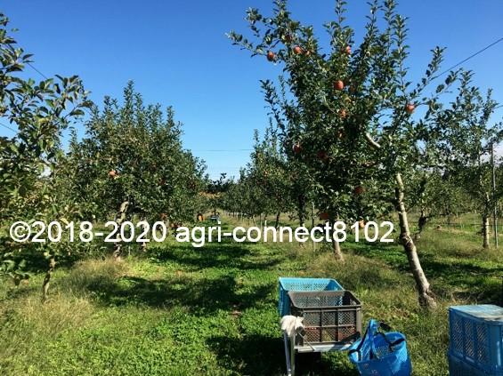 f:id:agri-connect:20201018235439j:plain