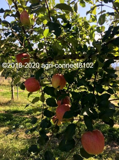 f:id:agri-connect:20201018235503j:plain