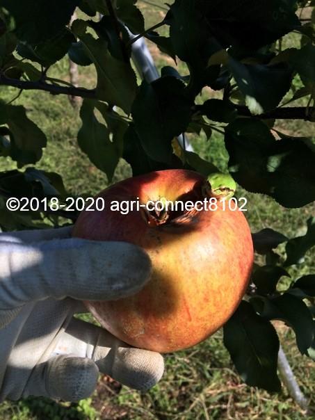 f:id:agri-connect:20201018235506j:plain