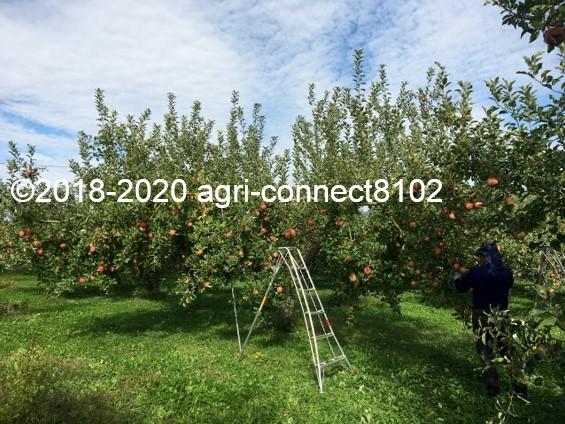 f:id:agri-connect:20201019000323j:plain