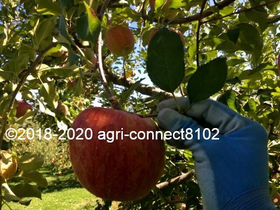 f:id:agri-connect:20201019000748j:plain