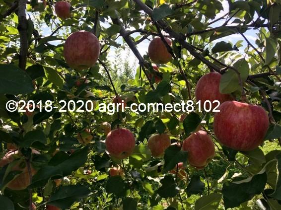 f:id:agri-connect:20201019002413j:plain