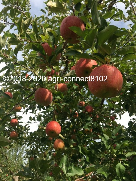 f:id:agri-connect:20201019003337j:plain