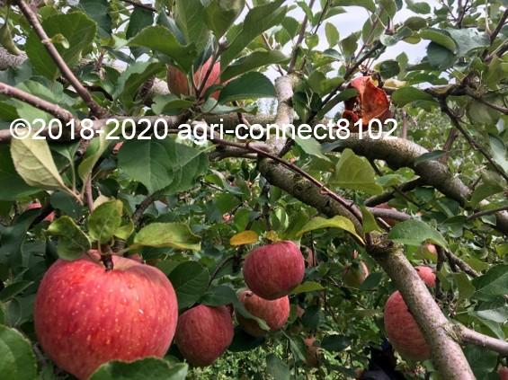 f:id:agri-connect:20201019003522j:plain