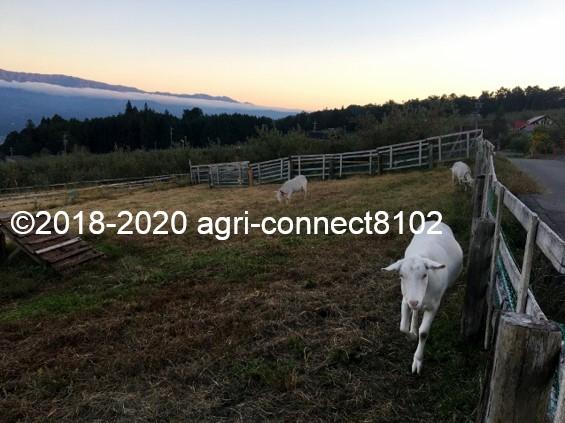 f:id:agri-connect:20201019011639j:plain