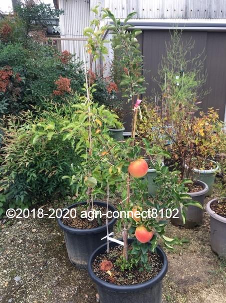 f:id:agri-connect:20201024224650j:plain