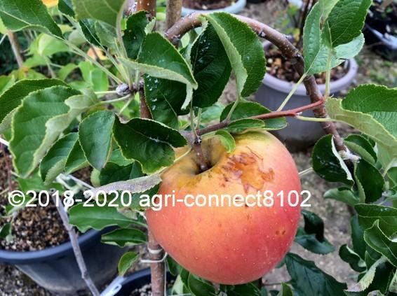 f:id:agri-connect:20201024224658j:plain