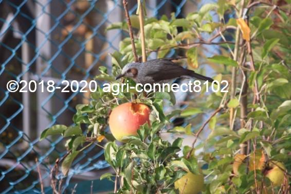 f:id:agri-connect:20201024225045j:plain
