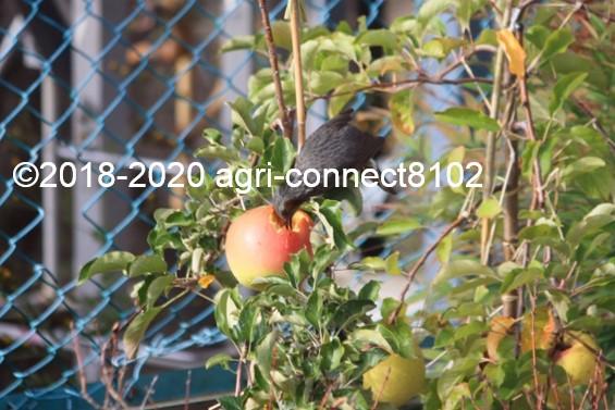 f:id:agri-connect:20201024225111j:plain
