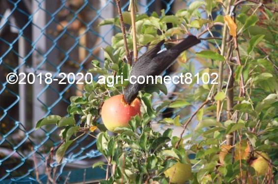 f:id:agri-connect:20201024225117j:plain