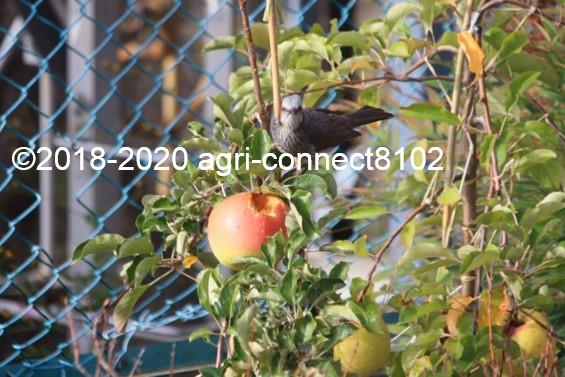 f:id:agri-connect:20201024225124j:plain
