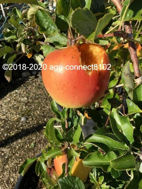 f:id:agri-connect:20201024225351j:plain