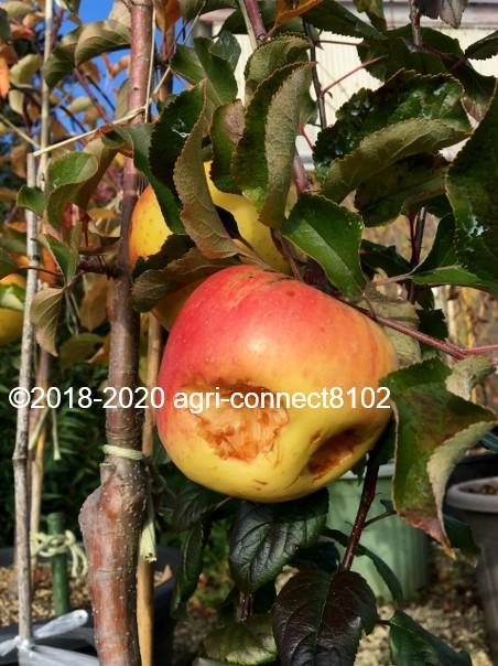 f:id:agri-connect:20201118210358j:plain