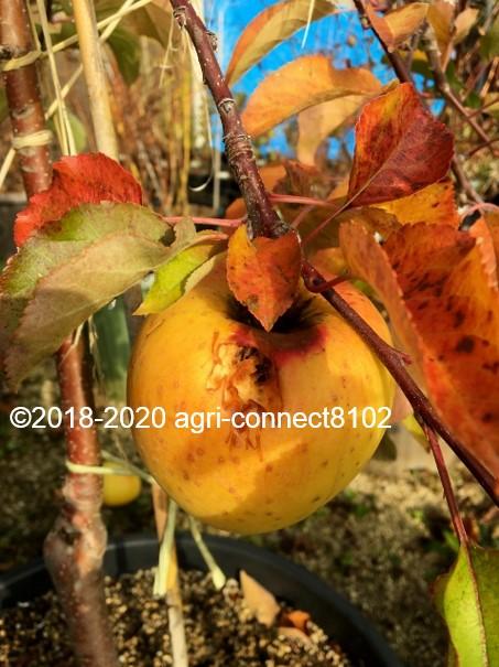 f:id:agri-connect:20201118210404j:plain