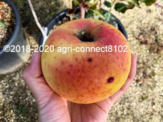 f:id:agri-connect:20201118210739j:plain