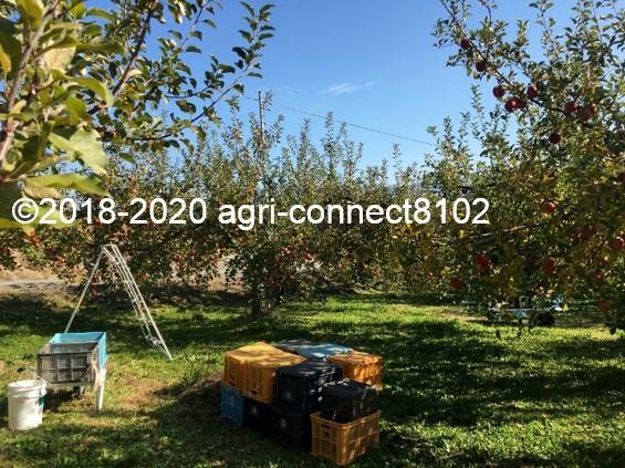 f:id:agri-connect:20201120233649j:plain