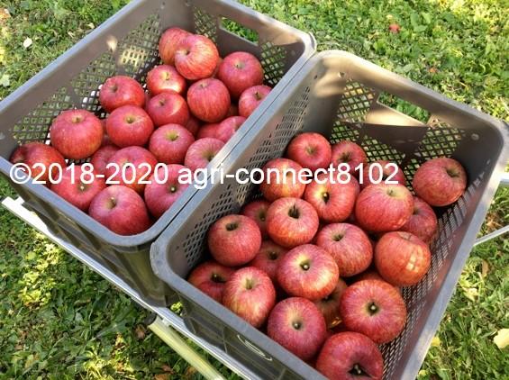 f:id:agri-connect:20201120233715j:plain